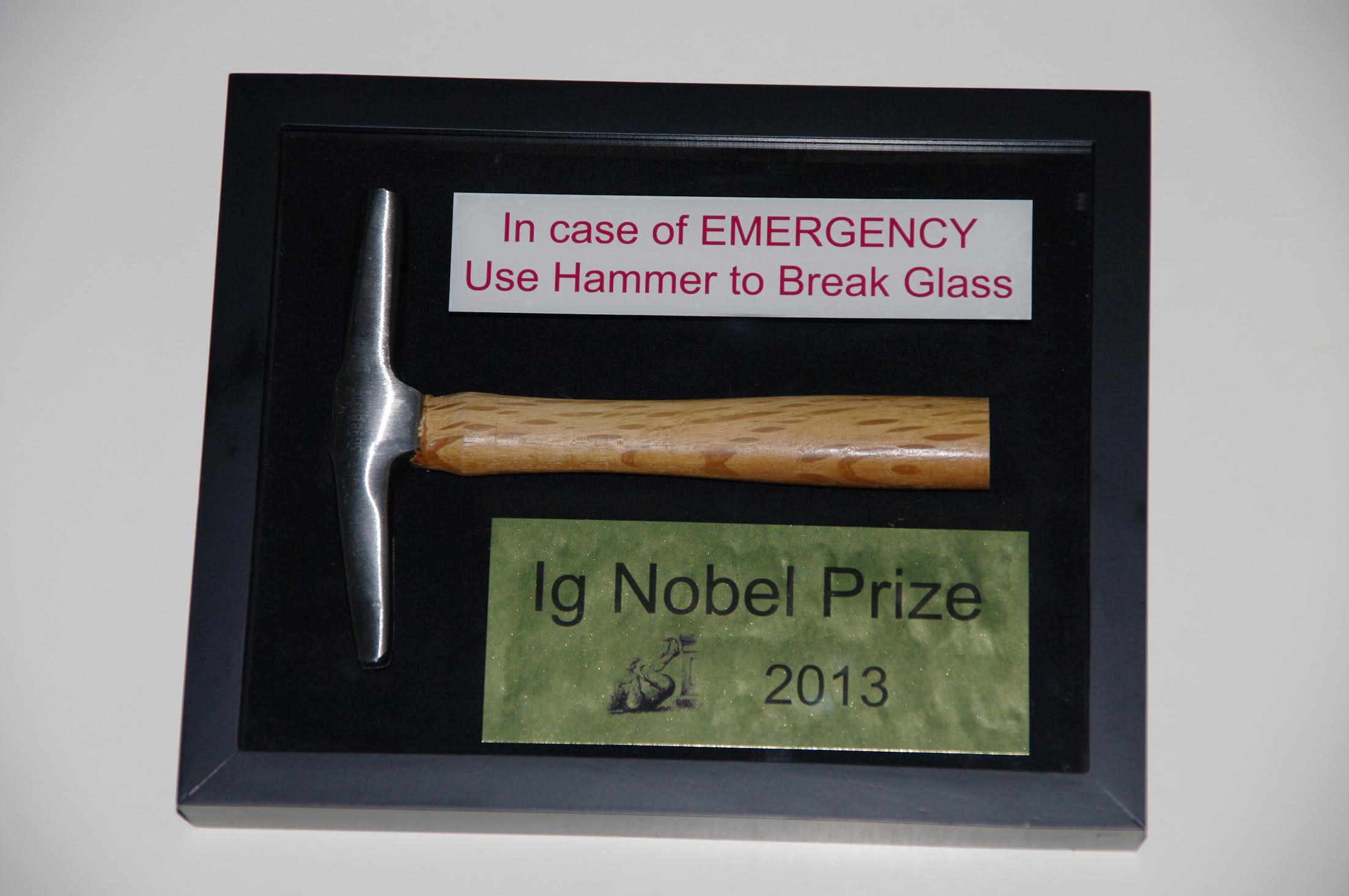 The 2013 Ig Nobel Prize. Photo by Eric Workman