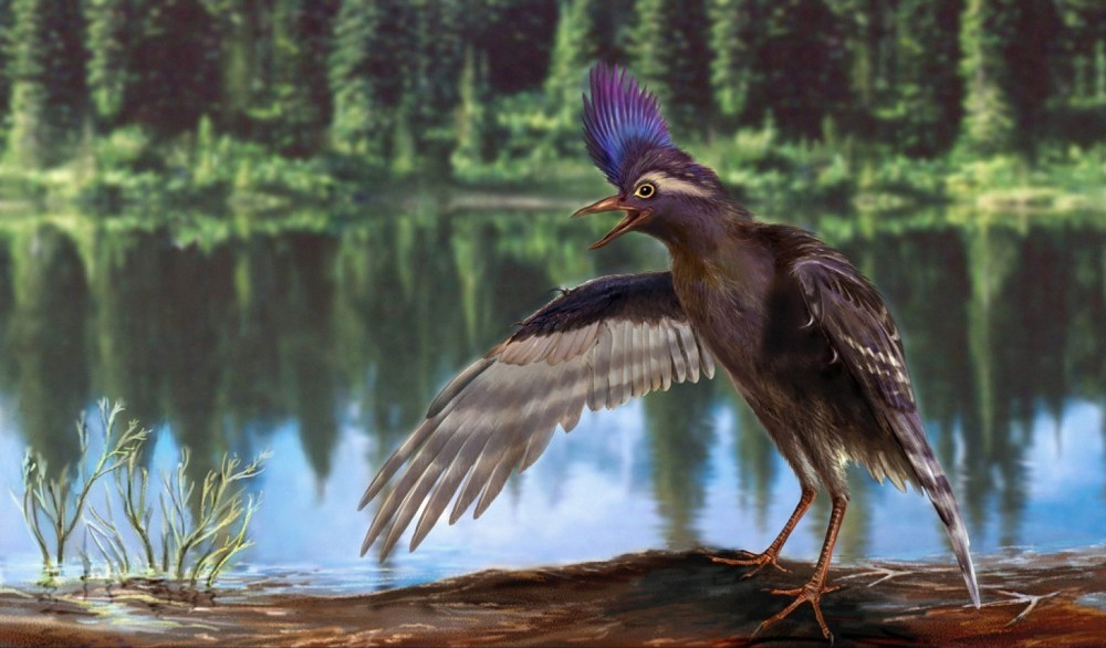 A reconstruction of the Archaeornithura meemannae, a specialized wading bird from the Early Cretaceous of China. Photo by Zongda Zhang