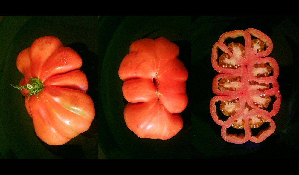 A top view, bottom view, and slice of a beefsteak tomato. Photo by Dominik Hundhammer/CC BY-SA 3.0