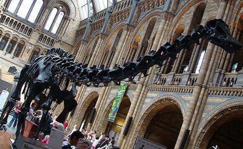 Diplodocus in the Great Hall of the Natural History Museum, London. Photo by nikoretro/flickr/CC BY-SA 2.0
