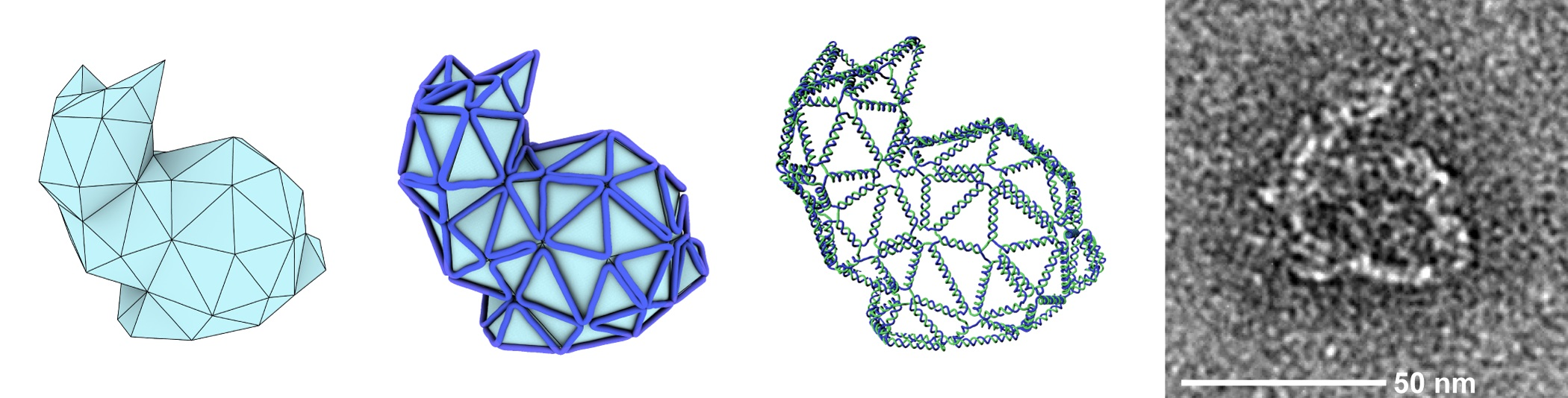"The team first created a polygon mesh of a bunny (left), then used a computer algorithm to figure out how a single strand of DNA could be routed so that it would self-assemble into the prescribed shape, with the help of DNA ""staple"" strands. The result was the ""real"" DNA nanostructure you see at right. Image courtesy Björn Högberg"