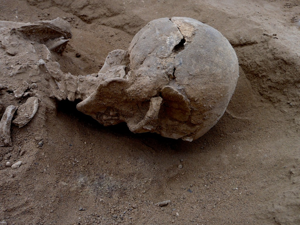 Detail of the skull of skeleton KNM-WT 71255 in situ. This skeleton was that of a man, found lying prone in the lagoon's sediments. The skull has multiple lesions on the front and on the left side, consistent with wounds from a blunt implement, such as a club. Photo by Marta Mirazon Lahr, enhanced by Fabio Lahr
