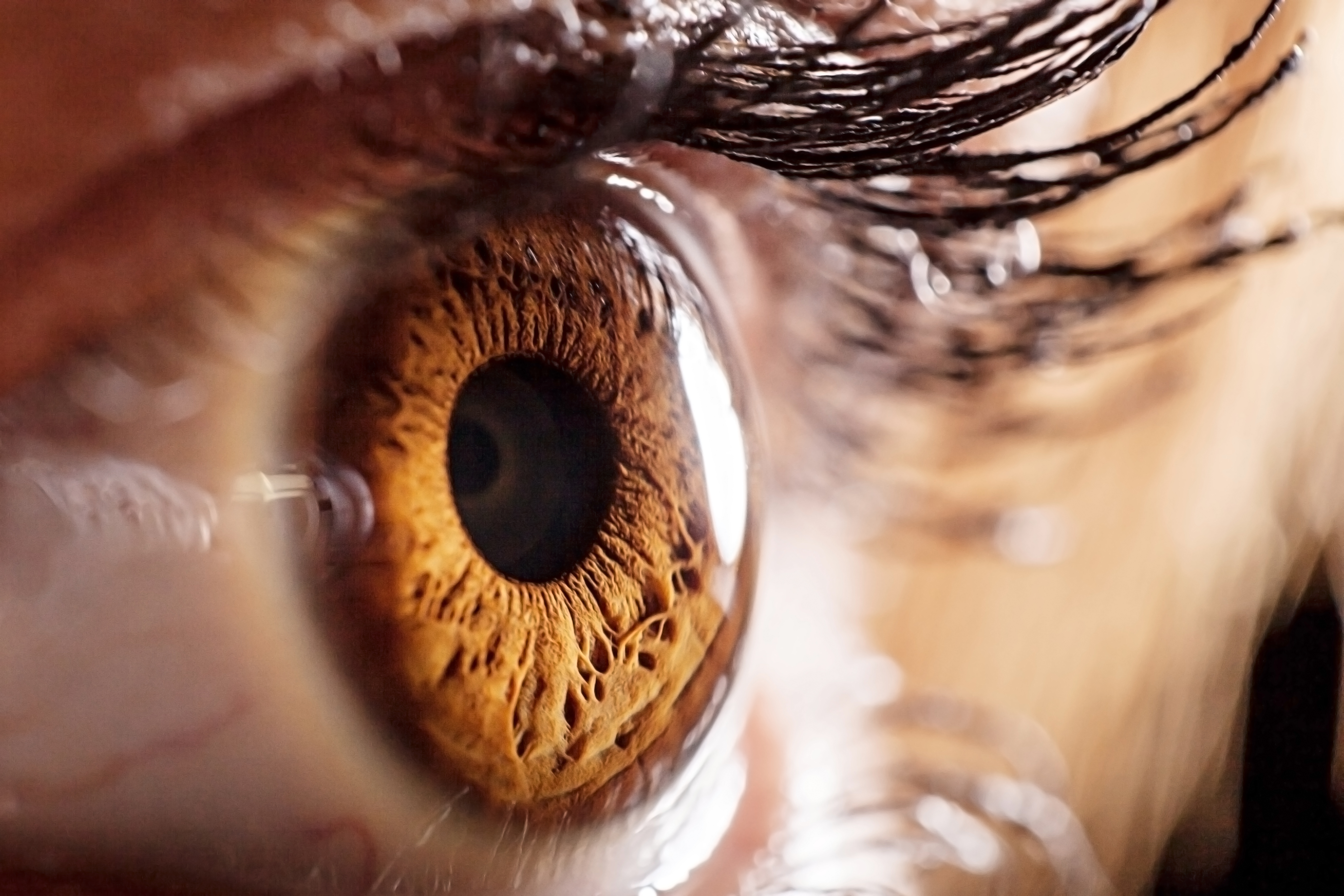 Closeup of an eye. From Shutterstock.