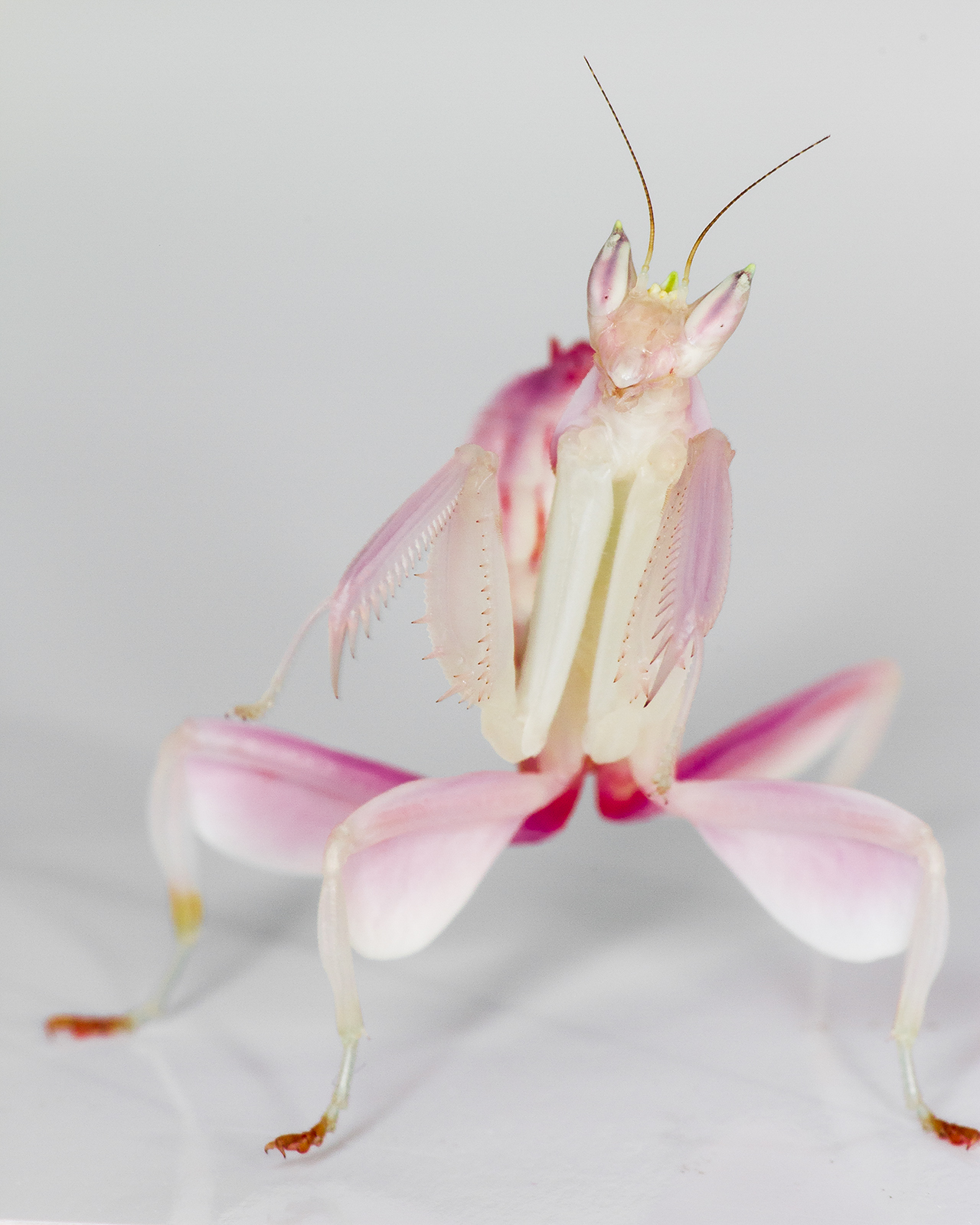 praying mantis essay photo adventures curiosity and learning