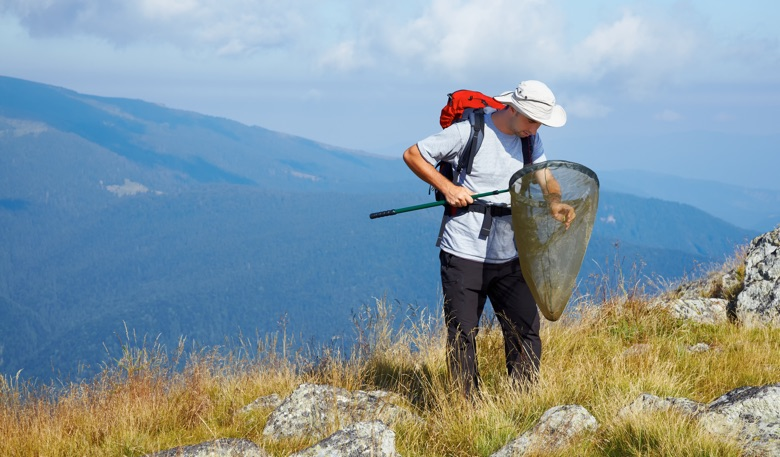 Young entomologist searching for insects at high altitude in the mountains. Photo by Gabriela Insuratelu