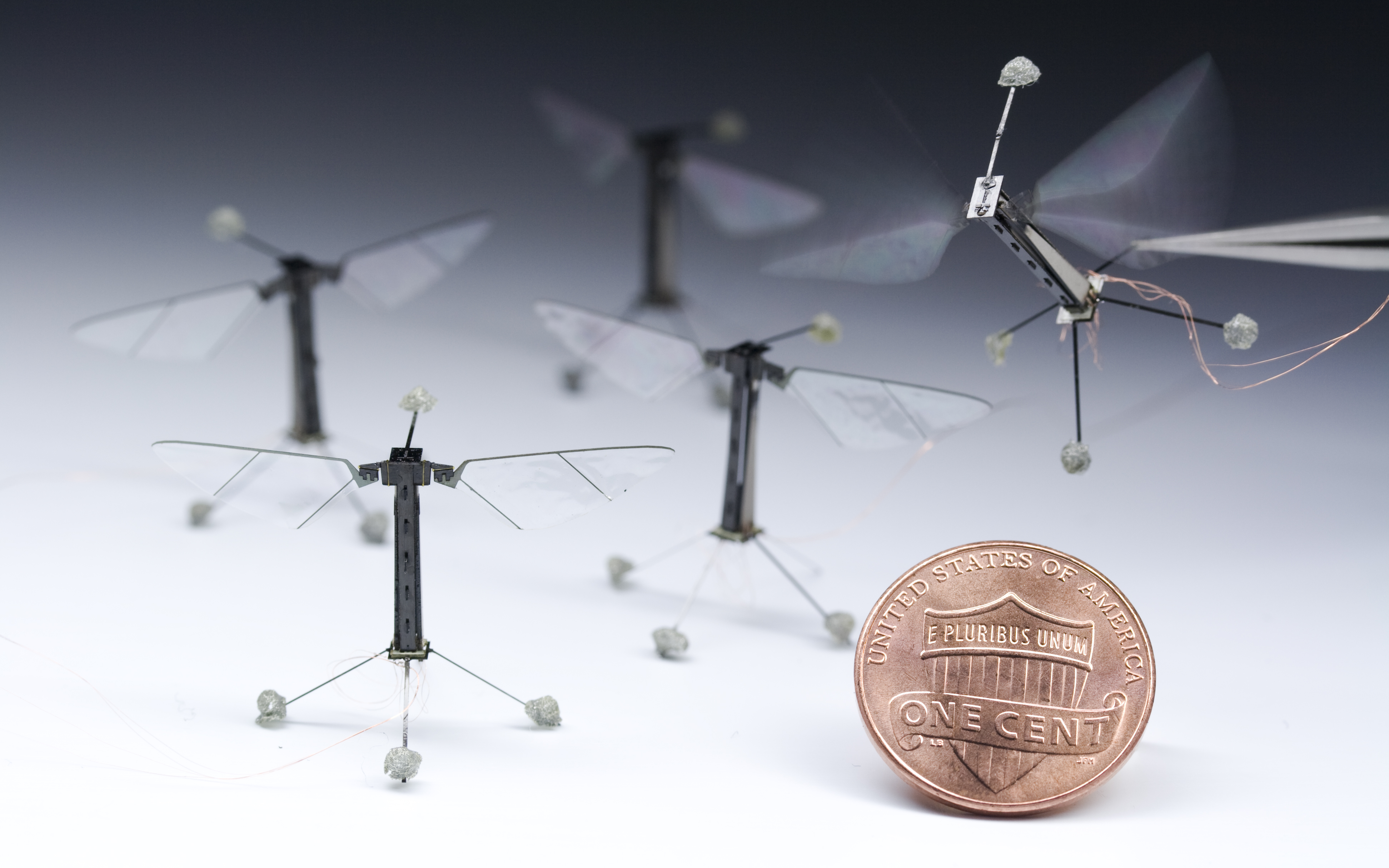 A fleet of Robobees next to a penny, Credit: Kevin Ma and Pakpong Chirarattananon, Harvard University