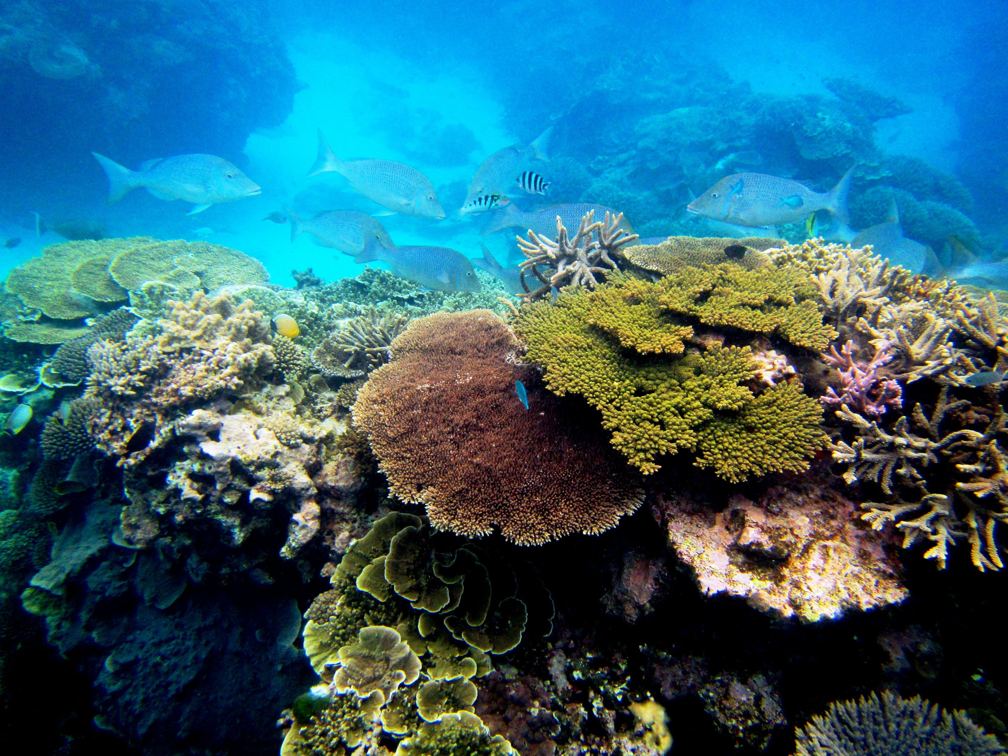 Coral Sperm Banks: A Safety Net for Reefs? - Science Friday