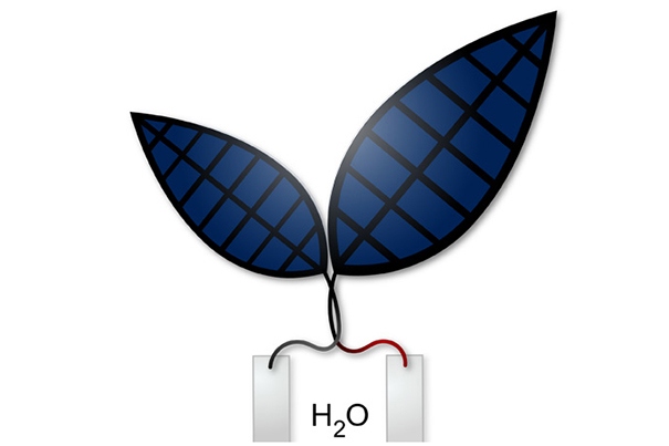 Melding Biology and Chemistry in a 'Bionic Leaf'