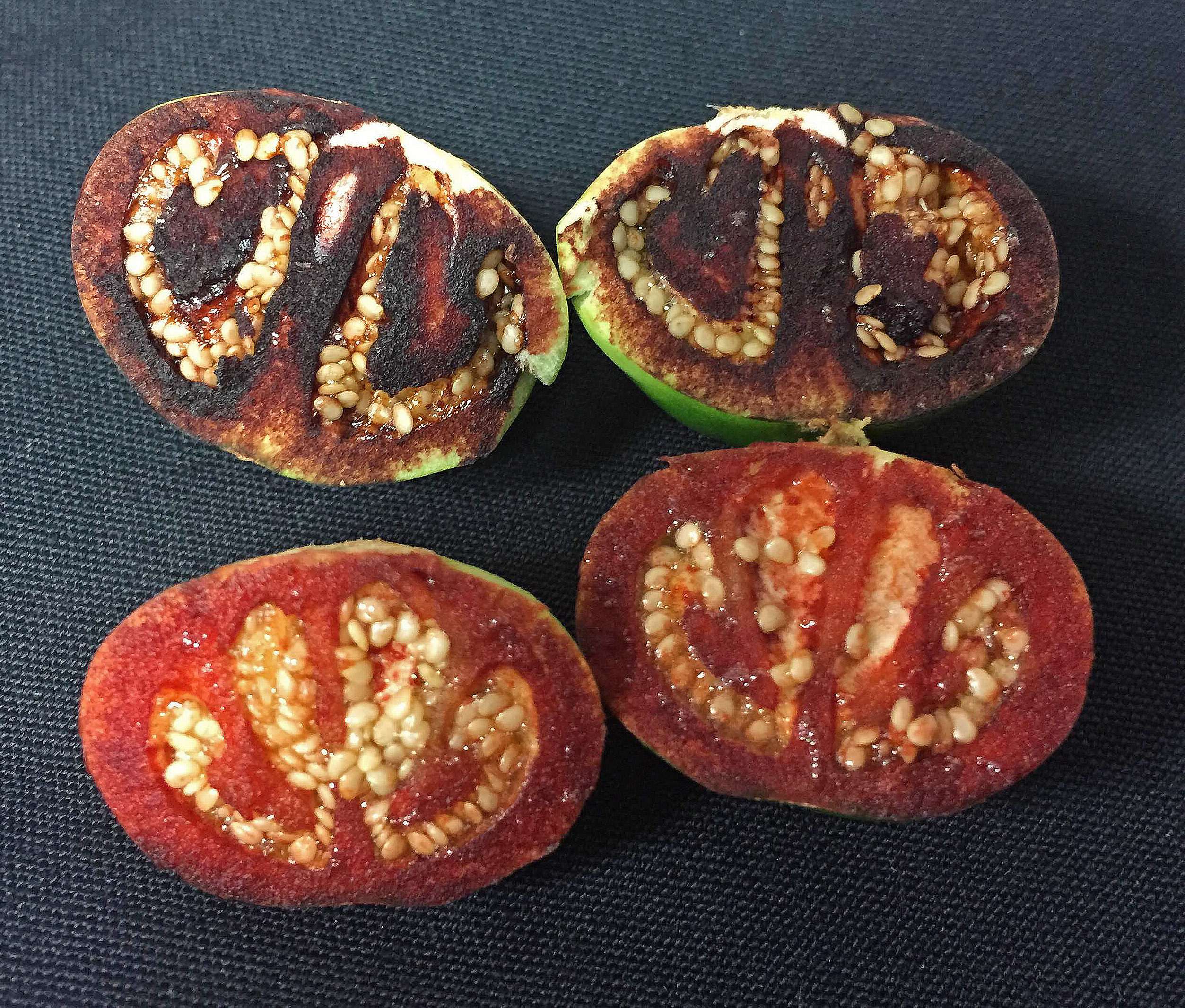 Blood red staining of recently-cut unripened fruits of Solanum ossicruentum. Photo by Jason T. Cantley.