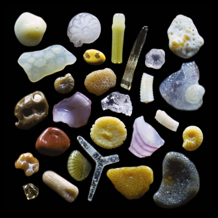 This intriguing array of grains of sand reflects the diversity of marine life in the ocean around Maui as well as the volcanic origin of the island. At the center is a tiny fragment of glass. Above this is a caramel colored fragment of a bryozoan, an aquatic animal that lives on coral reefs; two other bryozoan fragments are in the lower right. The three-pronged glassy spicule was once part of the internal skeletal support of a sponge. The chartreuse and tan rods are spines from different varieties of sea urchins. The rectangular fragment second from the top on the left-hand side is from a sea-urchin shell. Numerous forams, relatives of single-celled amoebae, are also pictured here: the chambered spiral on the top row, the yellowish disc near the center, and the shell-like brown and yellow spirals. The red and brown particles are polished fragments of volcanic rock. Magnified 125 times. Credit: Gary Greenberg/The Secrets of Sand