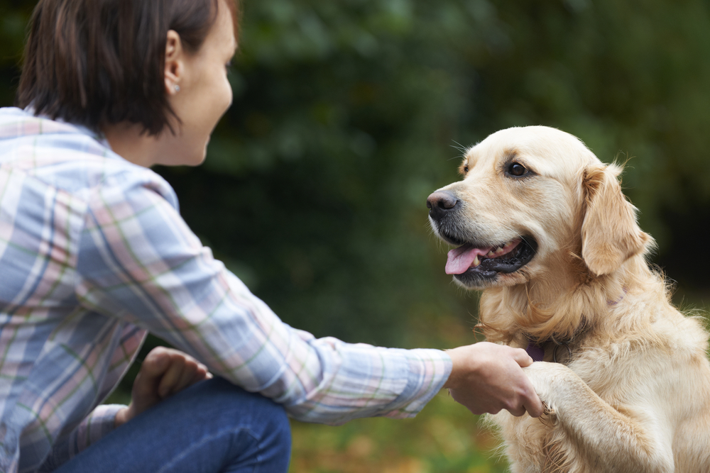 A dog shaking hands with its owner, from Shutterstock