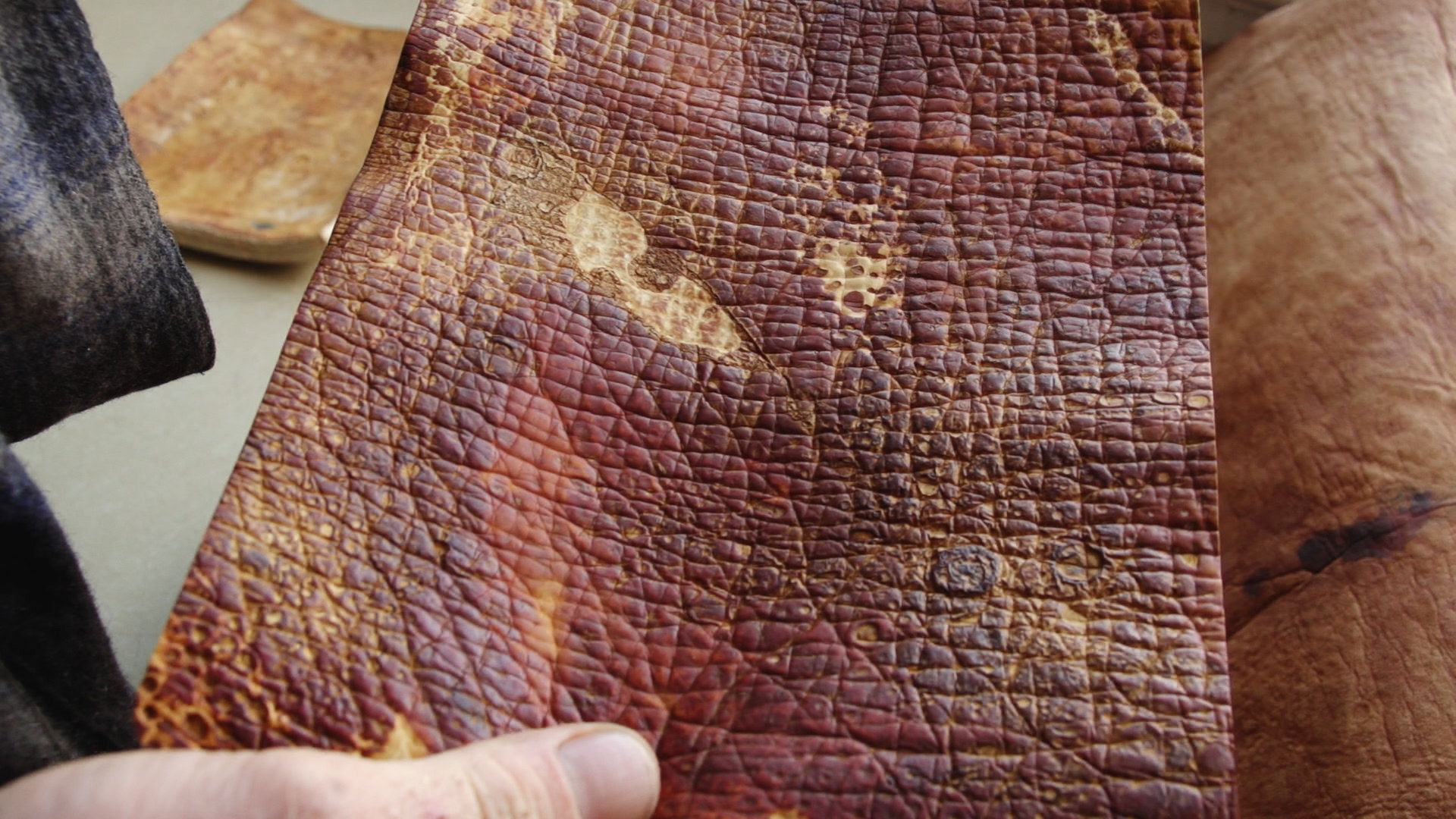 MycoWorks' mushroom leather. Credit: Science Friday