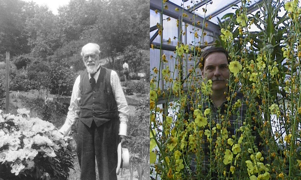 William J. Beal (left) started Michigan State University's long-term seed viability experiment in 1879. Frank Telewski (right) is its current steward. He's surrounded by moth mulleins (Verbascum blattaria) that have germinated and bloomed during the experiment.
