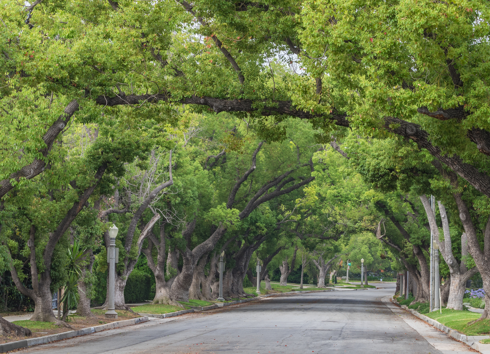 Tree branches over a street in Southern California. Credit: Shutterstock