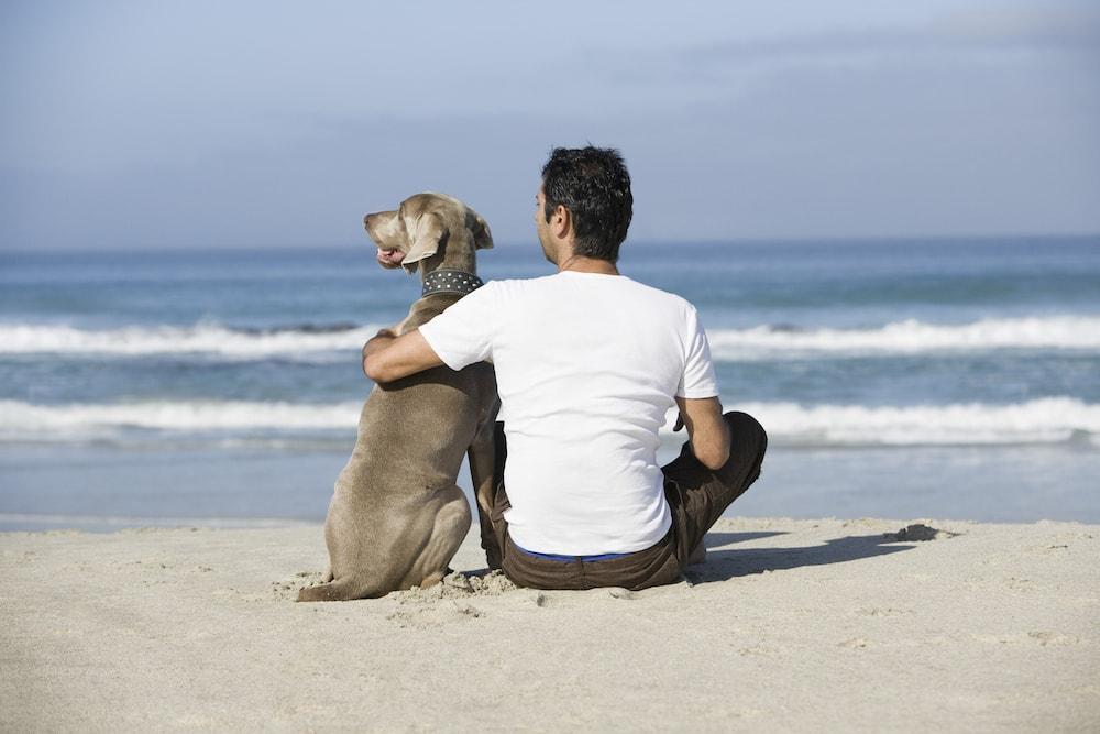 man sitting on beach with dog