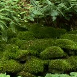 Merveilleux How To Cultivate Moss