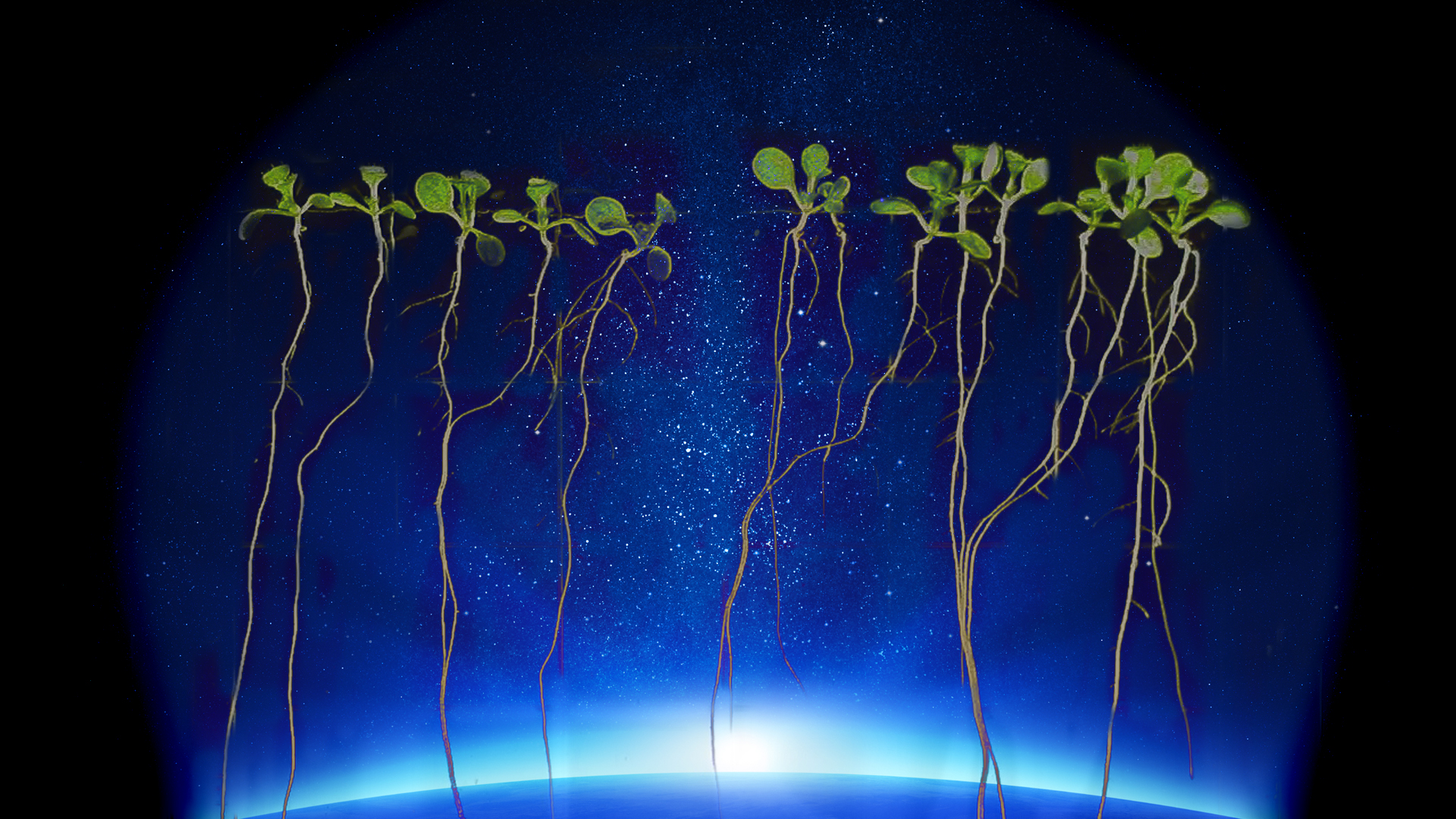 Plants in Space! - Science Friday | 1920 x 1080 jpeg 1713kB