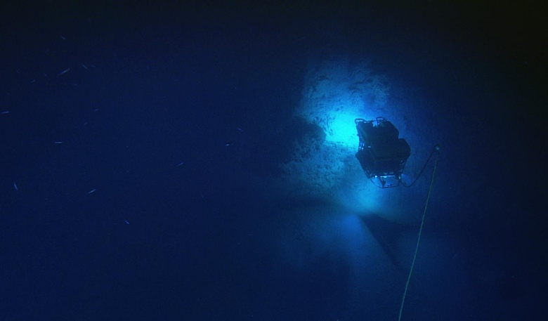 Scholl/ Nautilus Navy Blue PVC