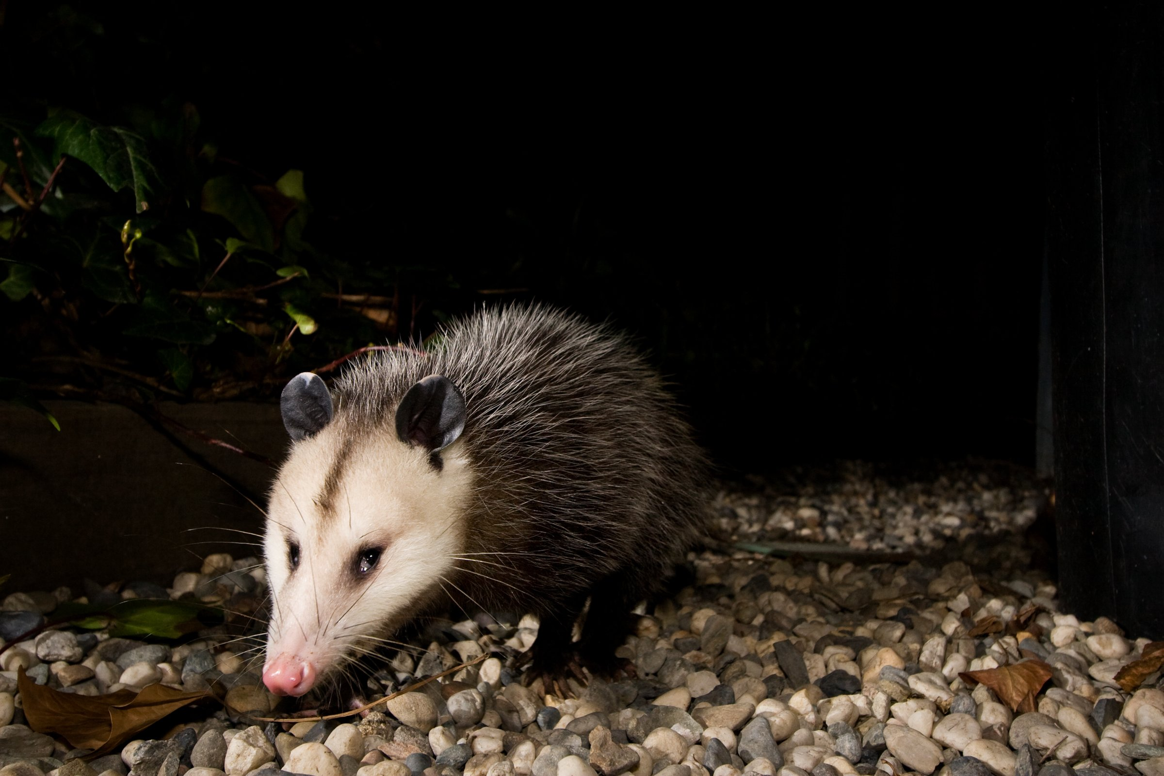 a candid camera for wildlife science friday rh sciencefriday com  list of common backyard animals