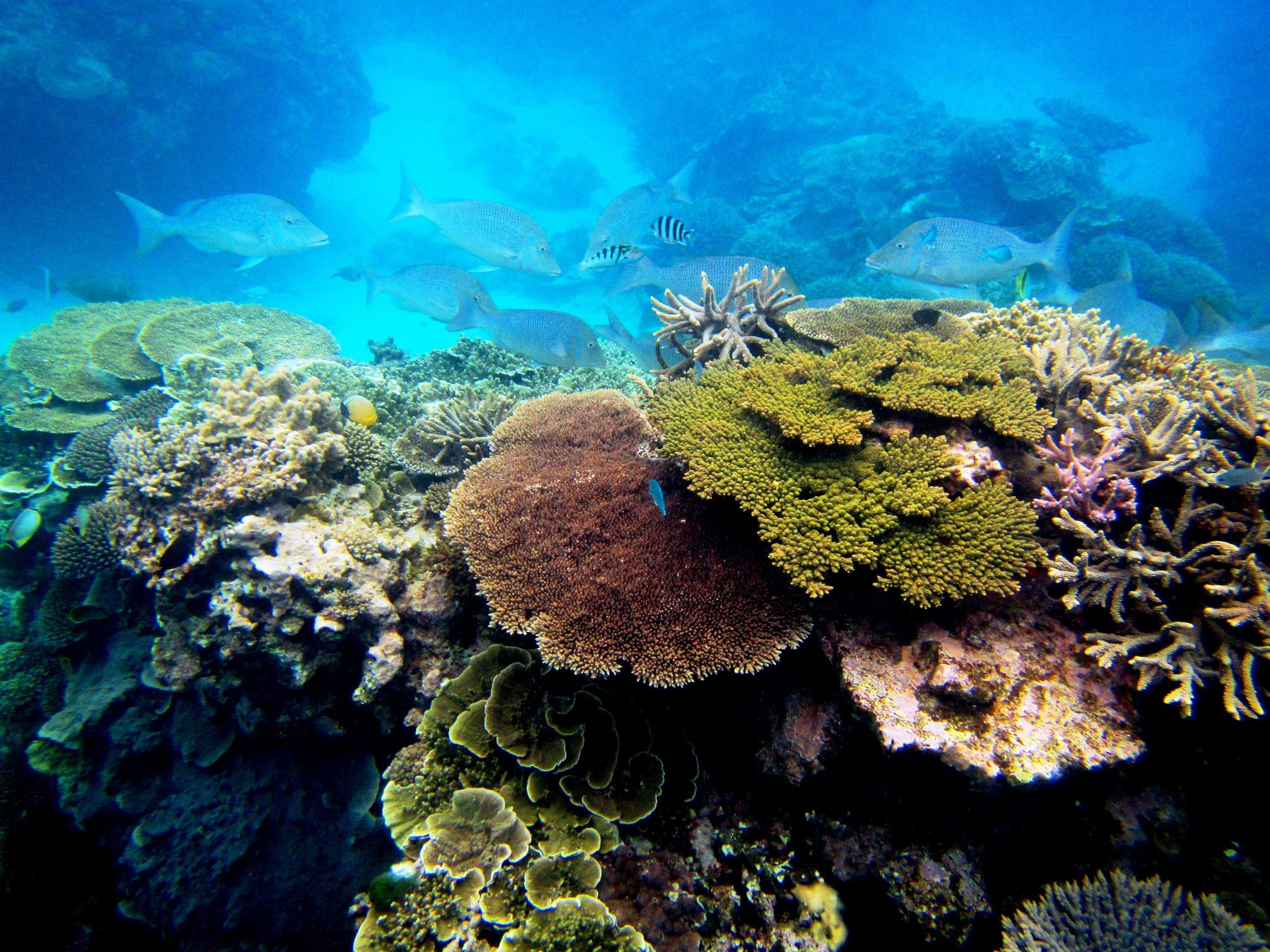 5d8ce0d7245e The Reef Is Quiet. Too Quiet.