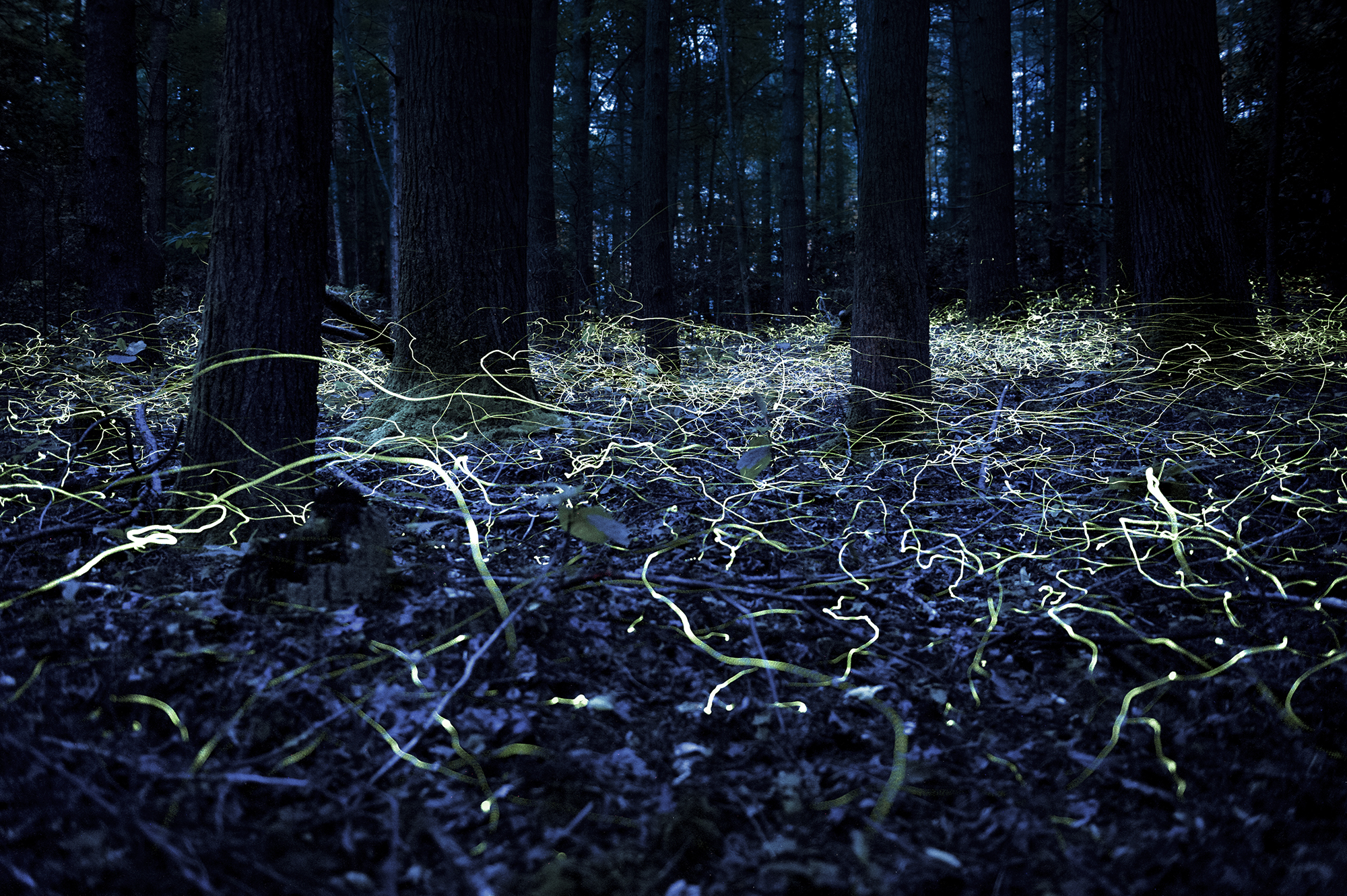 why do fireflies glow As fireflies are delighting children across the country with their nighttime displays, scientists are closing in on a better understanding of how the insects produce their enchanting glow.