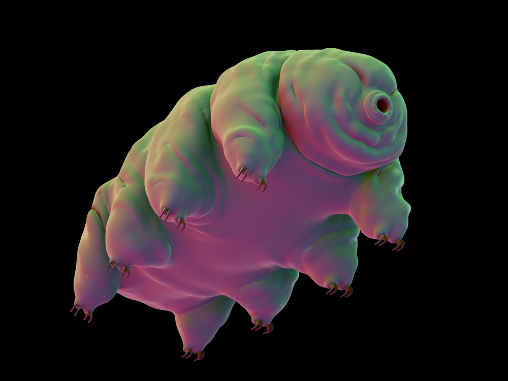 a microscopic view of an animal that looks like a cross between a rollie-pollie and a bear