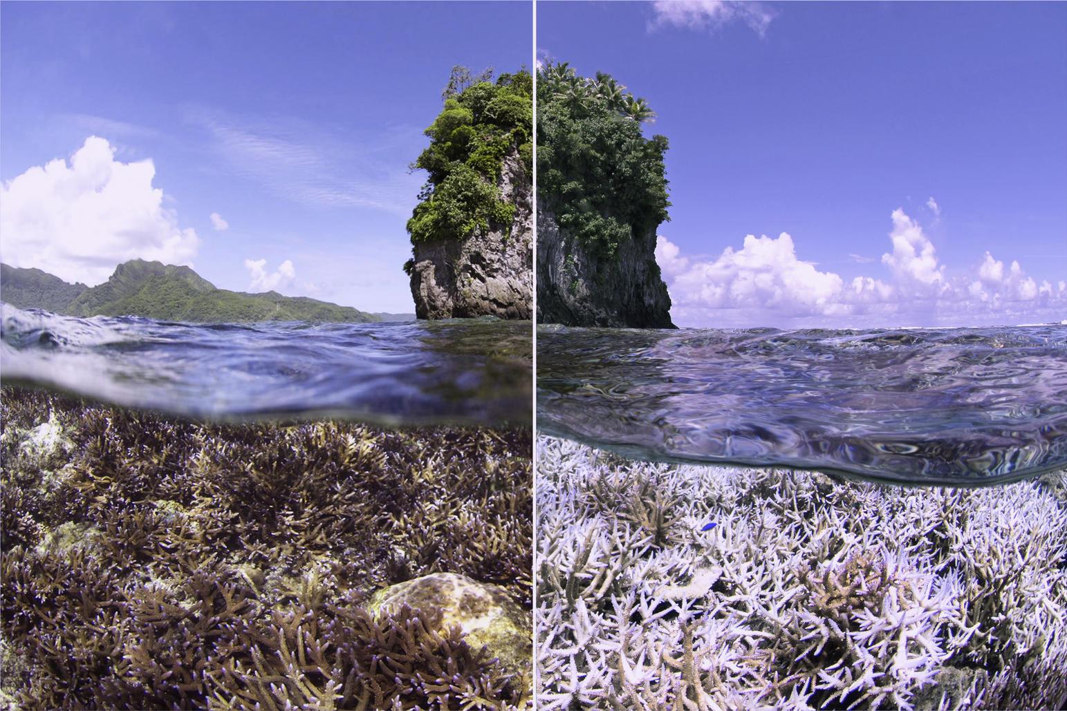 Chasing Coral Still 8 REV
