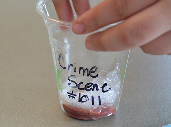 Smell That? It's Forensic Entomology At The Body Farm