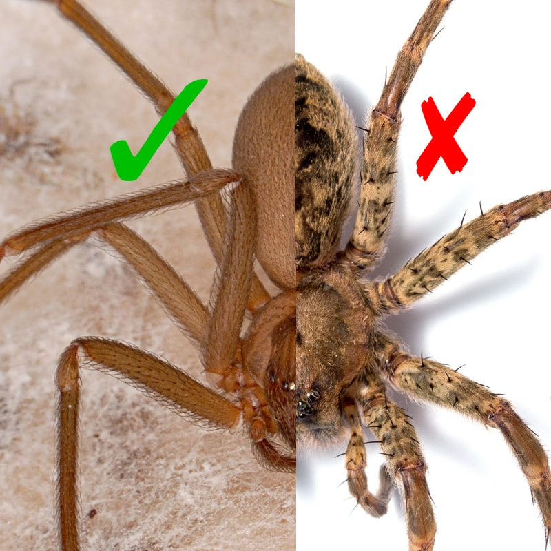 in defense of spiders