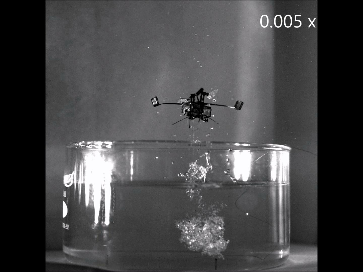 Meet The Insect Bot That Uses Water To Fly Inside Lab Where They Build Robots Are Smaller Than Pennies