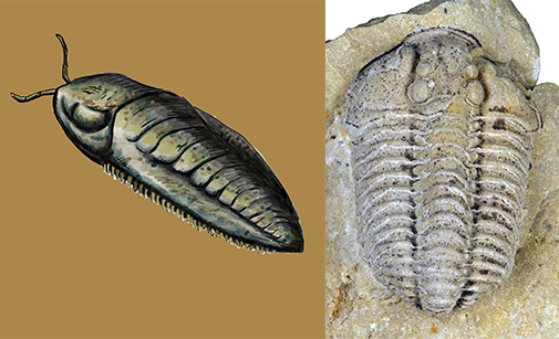 a new card game teaches you how fossils form