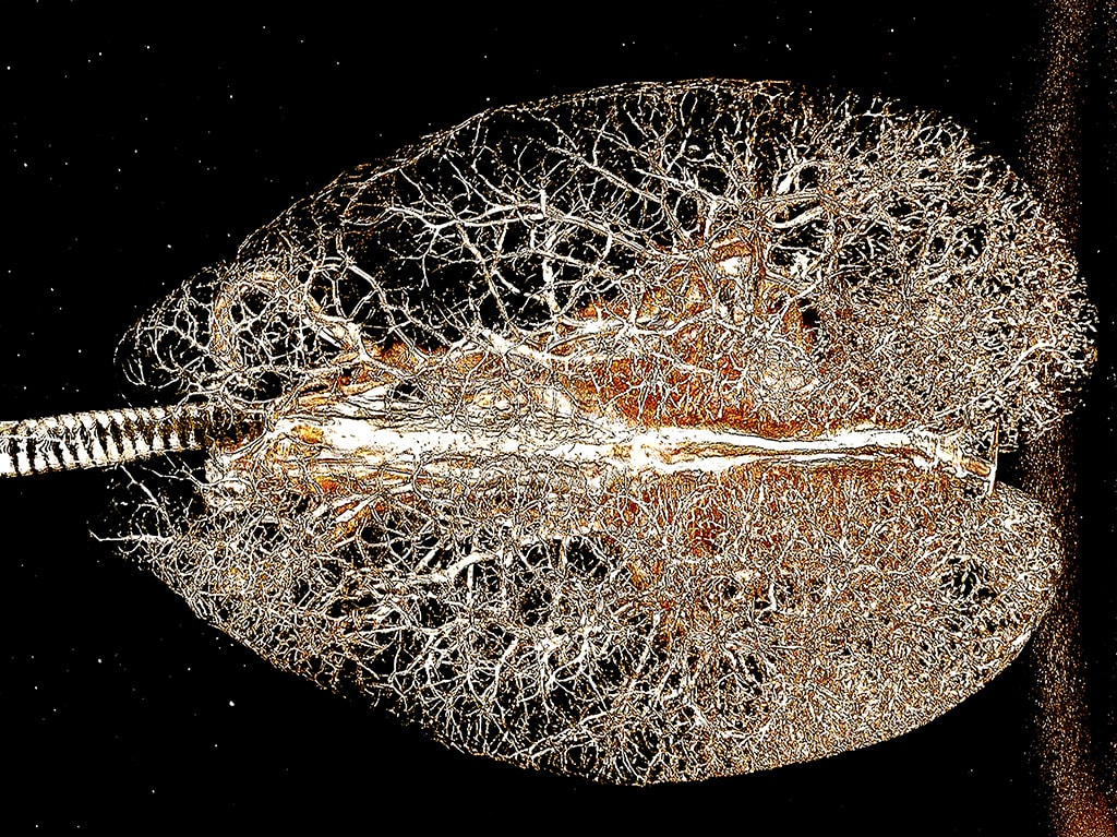 CT scan of alligator lungs