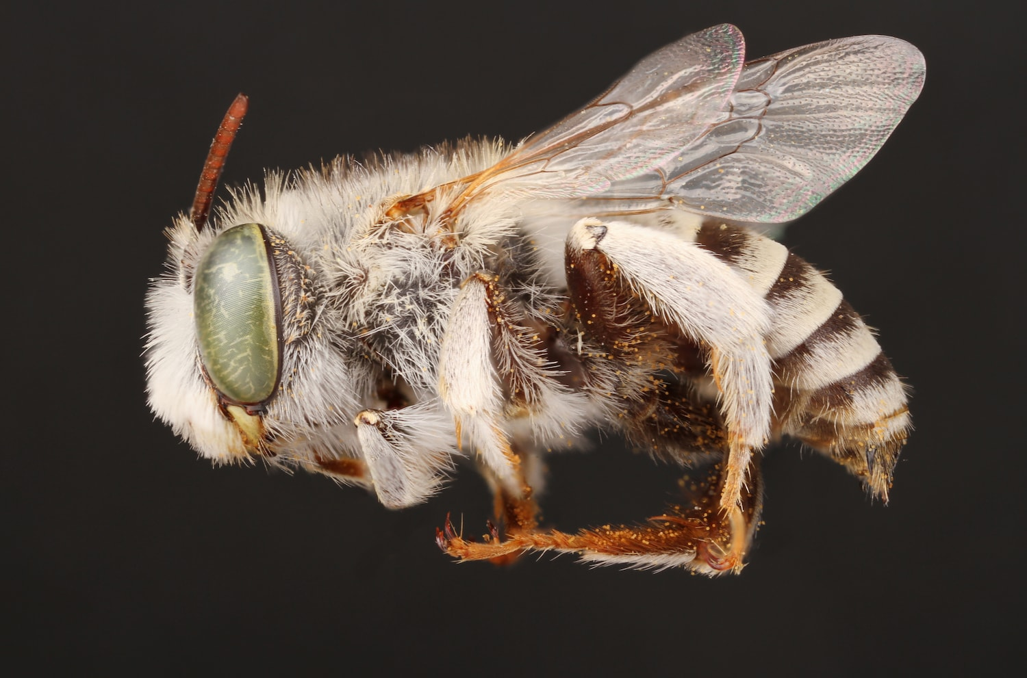 The Glittery Jewels Of The Bee World