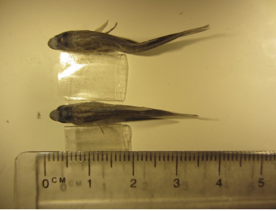 Comparison of two fish