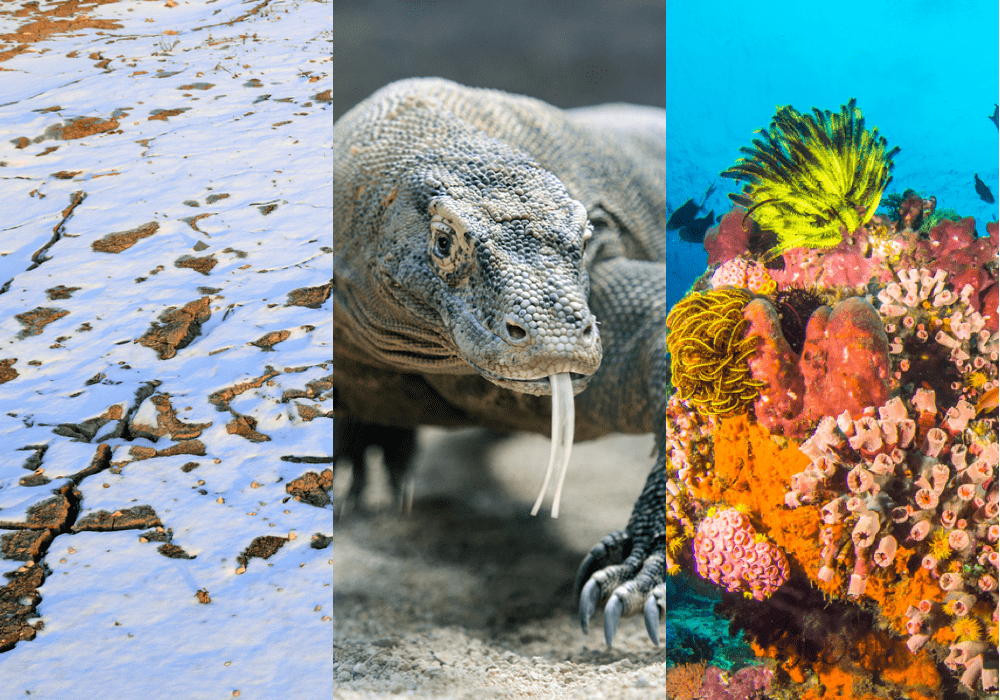 permafrost, komodo dragon, and coral reef