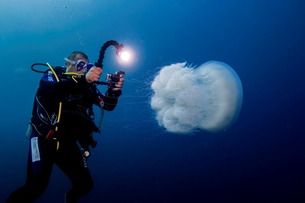 scuba diver photographing poofy white jellyfish