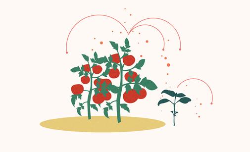 How Do Diseases Spread Between Plants