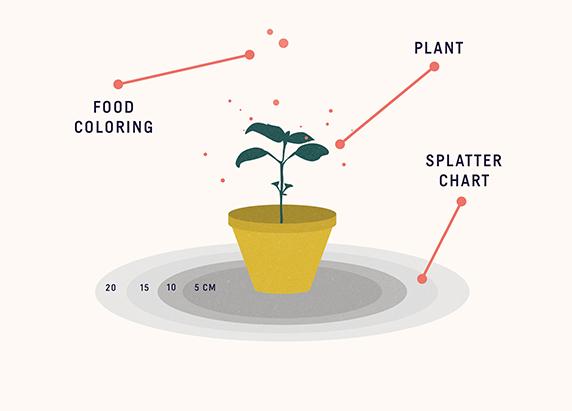 How Do Diseases Spread Between Plants?