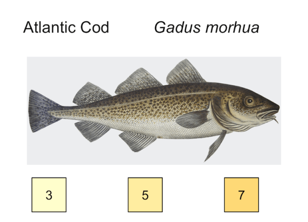 atlantic cod, temp preferences 3, 5, 7