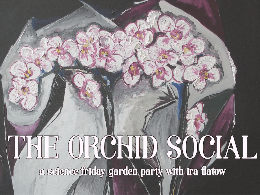 "painting of orchids with text that says ""the orchid social:""a science friday garden party with ira flatow"""