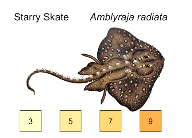 starry skate illustration, temperature preferences 3, 5, 7, 9