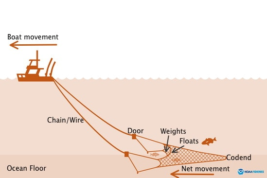 a graphic illustration of a boat traveling left and the bottom trawl collecting behind it