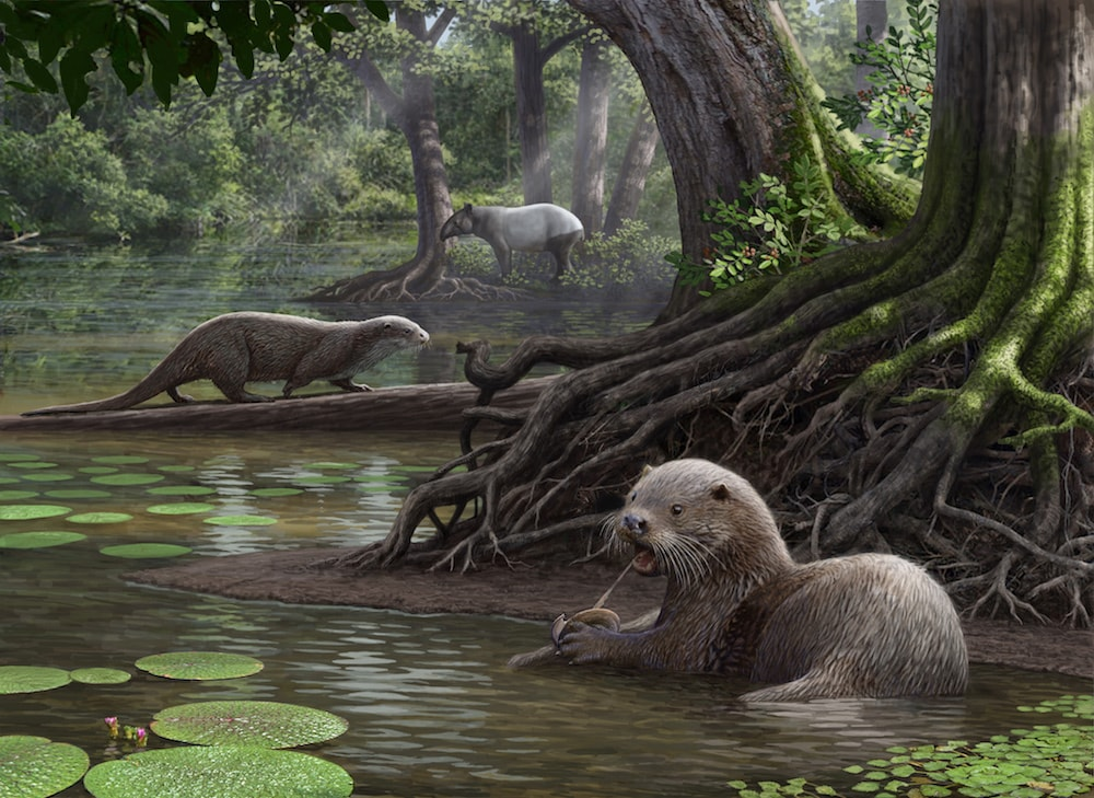 illustration of a giant otter in a marsh-like forest holding an oyster