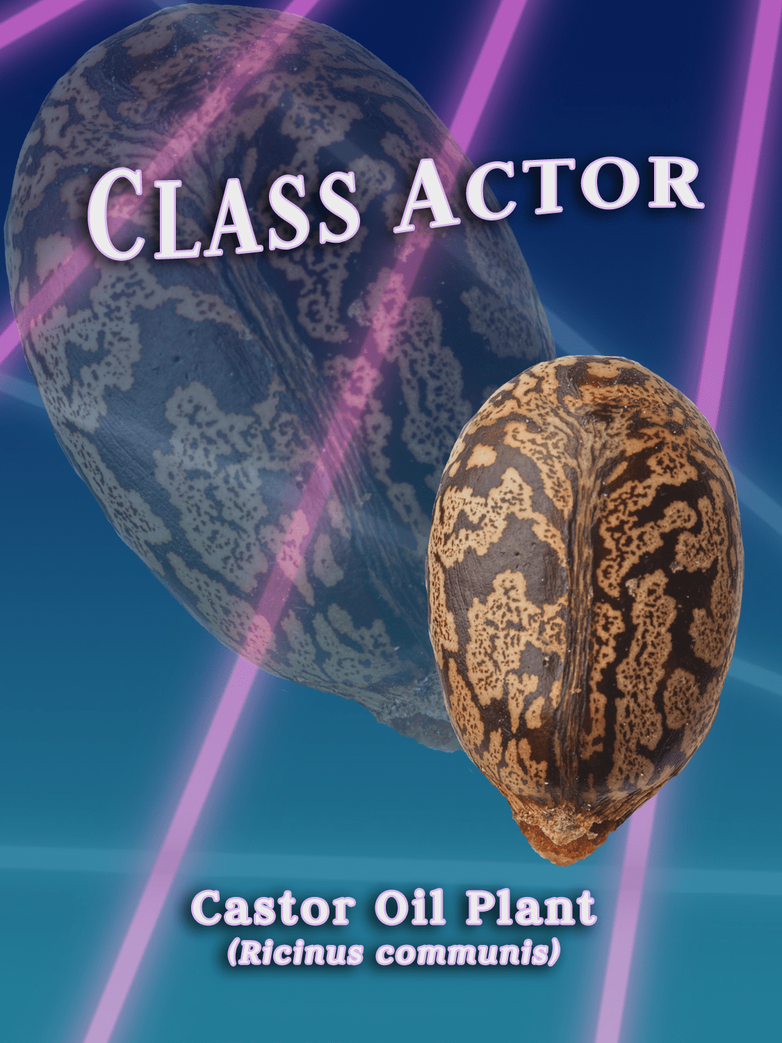 yearbook style portrait with 80s laser background of a castor oil seed.