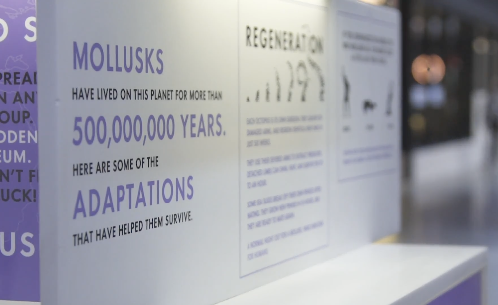 "text on the mollusk museum that says ""mollusks have lived on this planet for more than 500,000,000 years. Here are some of the adaptations that have helped them survive."""
