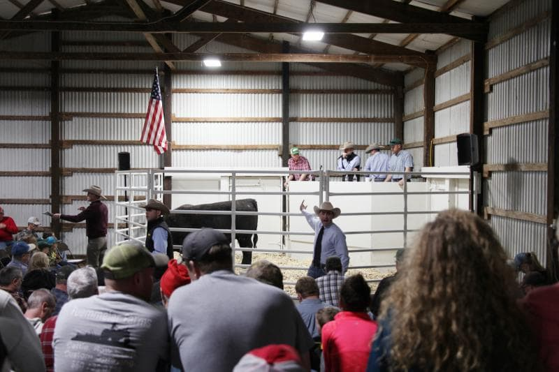 a group of people in a barn auctioning with a bull in the center of a gated ring