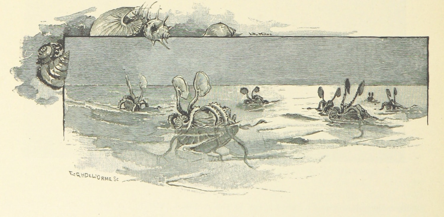 "black and white illustration of seven argonaut octopuses ""sailing"" on the surface of the ocean like boats"