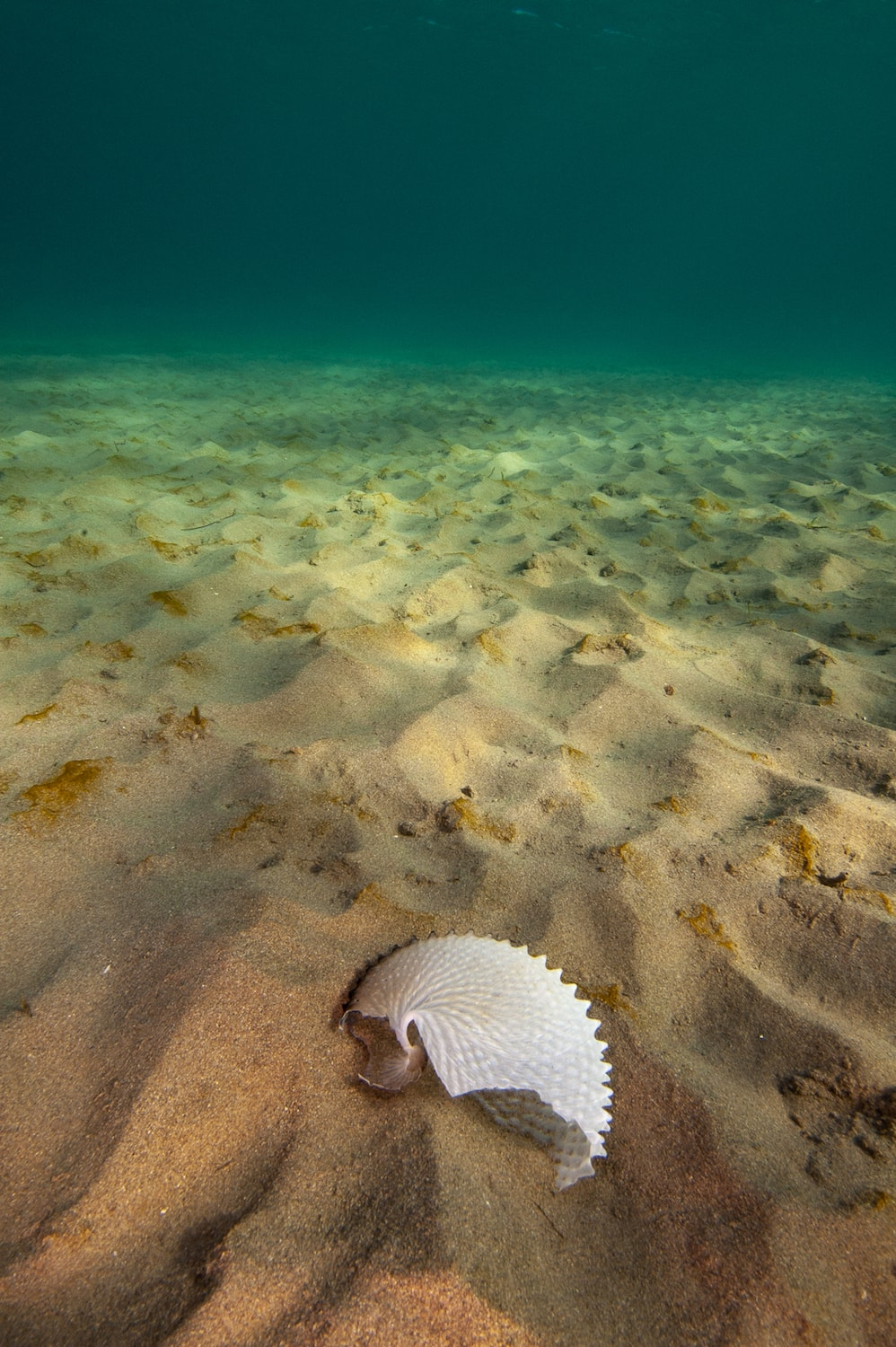 a lone shell on the seafloor under the beautiful turquoise green ocean