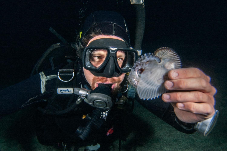 a man in scuba gear holding a female argonaut in her shell underwater