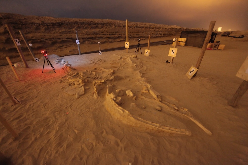 whale fossils at night that are being 3D scanned